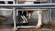 Melkveehouders dreigen met protestacties bij Albert Heijn