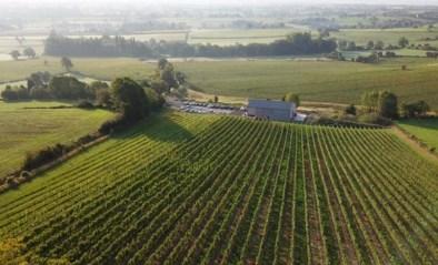 """Het Vlaamse wijndomein dat je voor 500 euro verwelkomt als vennoot: """"Je hoeft niet in de wijngaard te werken"""""""