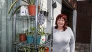 """Na boeken ruilen worden nu ook volop planten geruild in kasten: """"Idee uit Nederland gehaald"""""""