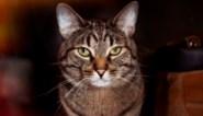 'Kattenmoordenaar van Brighton' veroordeeld tot vijf jaar gevangenisstraf