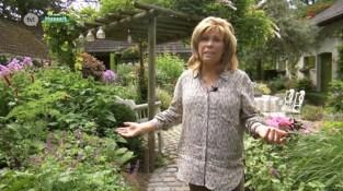 Hasseltse toparchitecte Dina Deferme zet haar levenswerk te koop