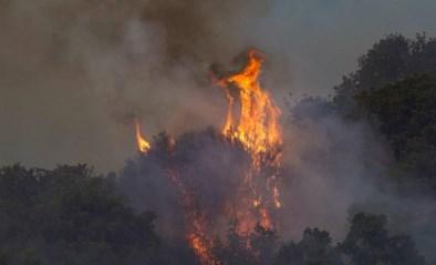 Griekenland, Turkije en Italië geteisterd door bosbranden en enorme hitte