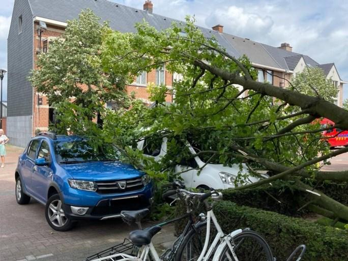 Twee auto's beschadigd door boom in Broechem