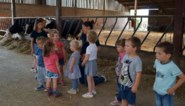 Kinderboerderij Het Fleckje leert kinderen over de boerderij