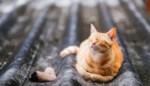 Brusselse brandweer redt man die kat probeerde te redden