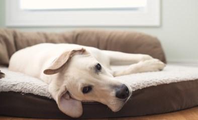 """Ambtenaar maakt foutje op officiële Covid-website van Belgische overheid: """"Super-de-luxe donut kussen ligt zeer comfortabel voor uw hond"""""""