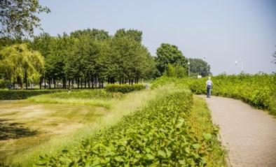 """Groenplan op komst voor district Antwerpen: """"Voor elke wijk een eigen strategie"""""""