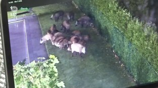 Bewakingscamera filmt 20 evers in Genkse tuin