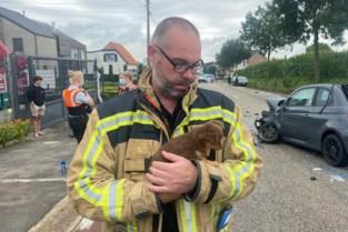 Man ernstig gewond bij zware klap in Riemst, brandweer neemt hondjes mee