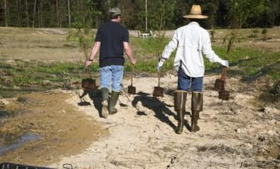 """Oxfam: """"Klimaatneutraal worden via herbebossing is rampzalig voor landbouw"""""""