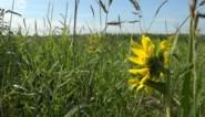 Een pluktuin, voedselbos of bessenstruiken? Schelle zoekt ideeën