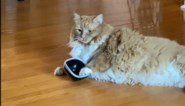 """Ongeduldige kat heeft honger en laat dat duidelijk merken: """"Wat een diva"""""""