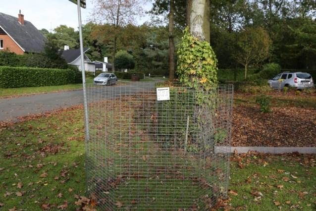 Gemeente bevraagt inwoners over bladkorvenplan