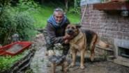 """Hond redt zijn baasje Marc tijdens overstroming: """"Ik zei tegen mezelf: dit is het, het is voorbij"""""""