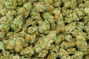 Persoon met 7,5 kilo cannabis betrapt bij verkeersactie in Sint-Truiden