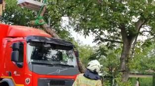 Vrachtwagen Jupiler belandt onder boom