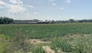 Landbouwbedrijf in Gors-Opleeuw krijgt ook geen vergunning voor varkensstal