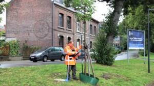 Stad laat 5.000 bomen onderzoeken en inventariseren