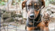 Strengere straffen voor dierenbeulen: tot 10 jaar cel mogelijk voor recidivisten