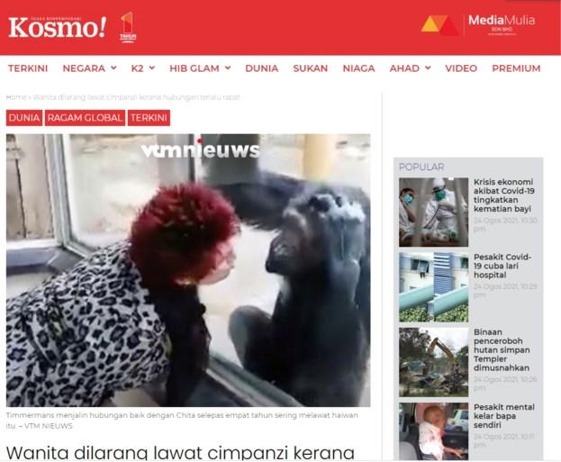 Berita dunia adalah bahwa pengunjung kebun binatang tidak lagi diizinkan untuk melihat simpanse kesayangannya