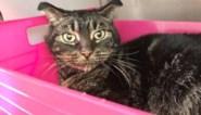 Nederlandse kat overleeft 52 dagen in leegstaande woning