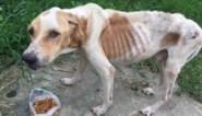 """Ze liet hond 34 dagen lang verhongeren, dus krijgt vrouw levenslang verbod op houden van dieren: """"Het ergste geval van dierenmishandeling dat ik ooit heb gezien"""""""