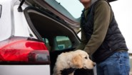 Diefstal van huisdieren wordt strafbaar feit in het Verenigd Koninkrijk