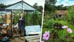 Een serre als bureau en varkens om te knuffelen: kijk binnen in de tuin van Mme Zsazsa