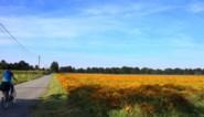 De kleurrijkste straat van Limburg ligt in Kinrooi