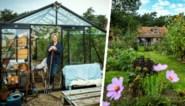1.500 m² moestuin, een serre als bureau en varkens die het gras kort houden: dit is het aards paradijs van Mme Zsazsa
