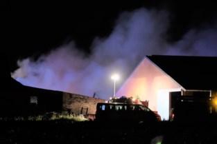 """Zware brand in stal kost het leven aan tientallen varkens: """"Ook asbest vrijgekomen"""""""