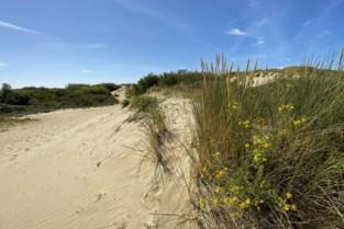 Zestiger die naakt in duinen lag te zonnen, riskeert maand cel