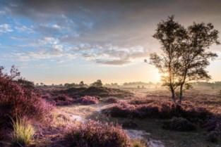 Grenspark Kalmthoutse Heide legt dit weekend aangepast plan voor Nationaal park voor
