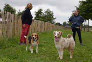 Broechemse honden kunnen nu los rennen en spelen aan De Moervelden