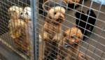 Kies niet zomaar de schattigste: zo ga je naar huis met de juiste asielhond