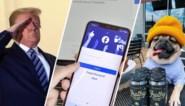 Geheime viplijst lekt uit: waarom een hond meer mag op Facebook en Instagram dan jij