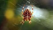 Geen angst voor spinnen? Dan heeft nieuw Gents onderzoek uw hulp nodig