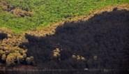 Bosbranden in zuiden van Spanje zijn onder controle