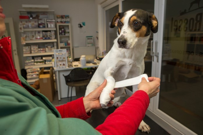 """Europees Parlement stemt straks over antibioticaverbod bij dieren: """"Of Blackie hierdoor zal sterven? In sommige gevallen wel, ja"""""""