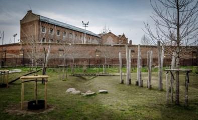Man klautert zes meter hoog, mogelijk om drugs over gevangenismuur te gooien