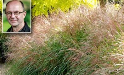 Goede sier maken met grassen