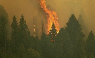 Grootste sequoia's ter wereld ingepakt tegen naderend vuur