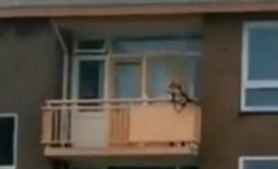 """Twee doden bij steekpartij in Nederlandse Almelo, """"man met kruisboog op balkon"""" gearresteerd"""