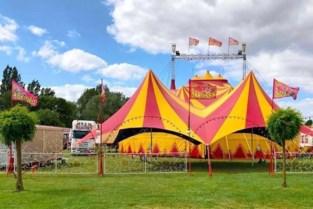 WIN. Circus Barones is terug van weggeweest en komt naar Halle (en jij kan er gratis bij zijn)