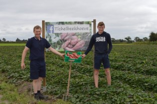 """Hoeve gaat exotische toer op: """"Door de steeds warmere zomers kan je deze aardappel ook hier kweken"""""""