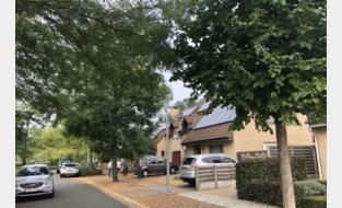 Kat Titus zet probleem met straatbomen op scherp