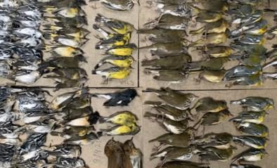 Vrijwilligster toont haar lugubere 'buit' aan WTC-torens: 291 dode vogels