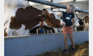 Koeknuffelen en ijsjes eten: Breykenshoeve publiekstrekker op Dag van de Landbouw