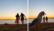 Romantische fotoshoot bij zonsondergang wordt verpest door ... zeemeeuw