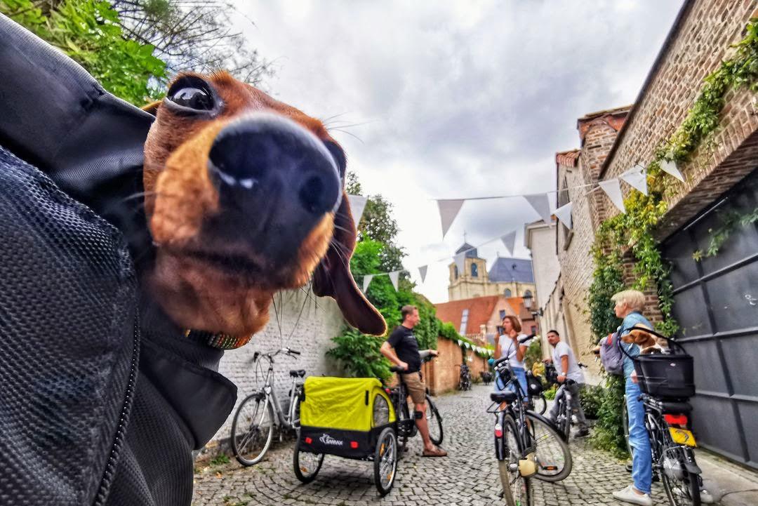 De Fietsgids neemt honden en hun baasjes mee op safari door Mechelen